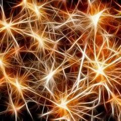 Neuroplasticidad y recuperación funcional